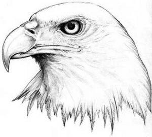 tiere-tattoo-vorlagen-127